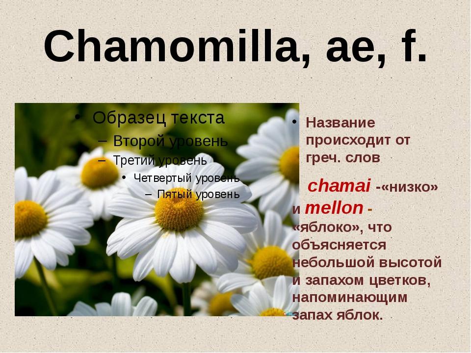Chamomilla, ae, f. Название происходит от греч. слов chamai -«низко» и mellon...