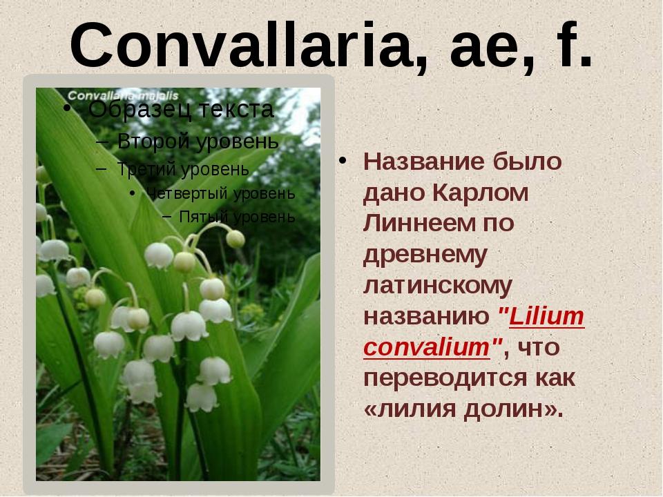 Convallaria, ae, f. Название было дано Карлом Линнеем по древнему латинскому...