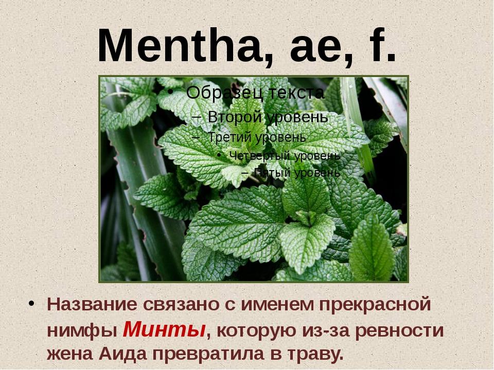 Mentha, ae, f. Название связано с именем прекрасной нимфы Минты, которую из-з...