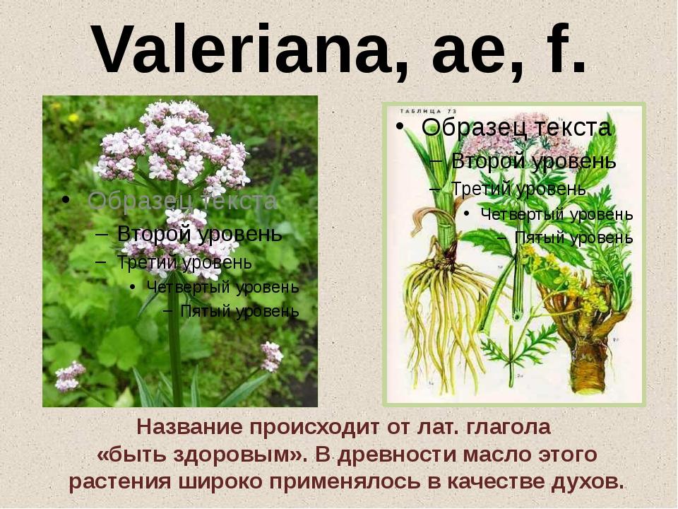 мне цветы на латыни с картинками итоге