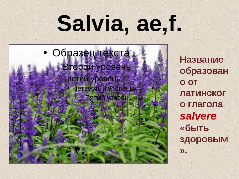 Salvia, ae,f. Название образовано от латинского глагола salvere «быть здоровы...