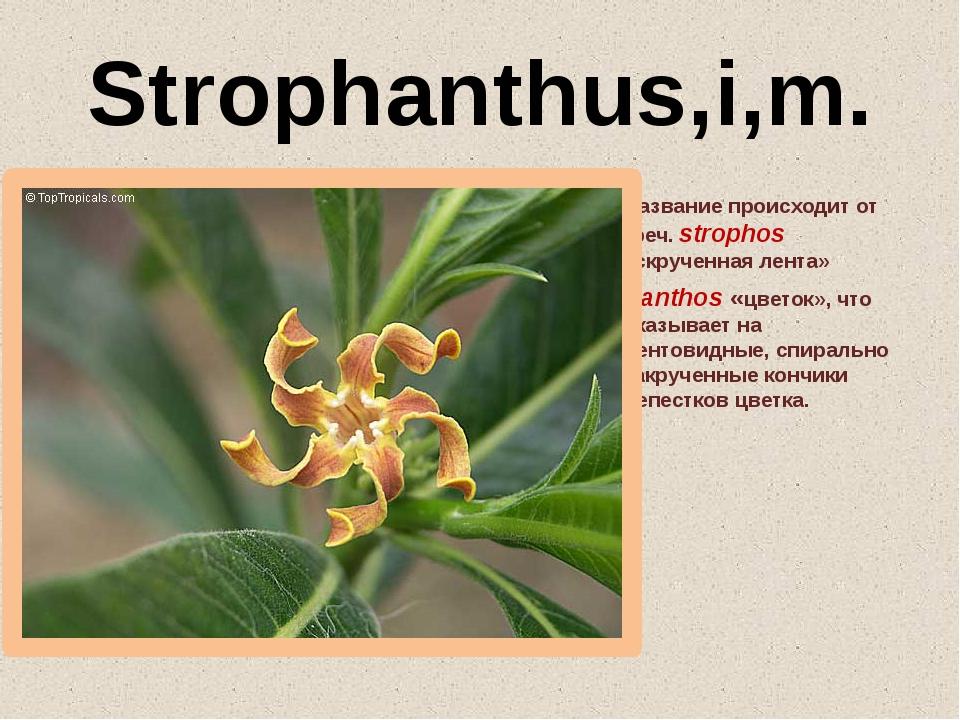 Strophanthus,i,m. Название происходит от греч. strophоs «скрученная лента» и...