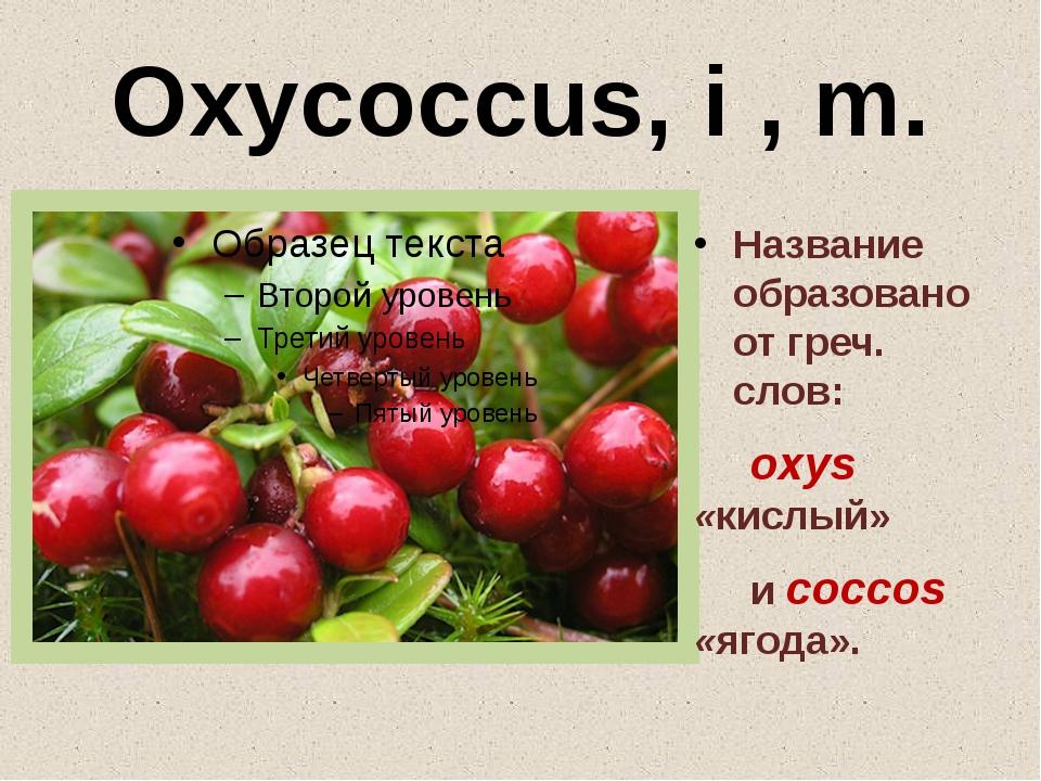 Oxycoccus, i , m. Название образовано от греч. слов: oxys «кислый» и coccos «...