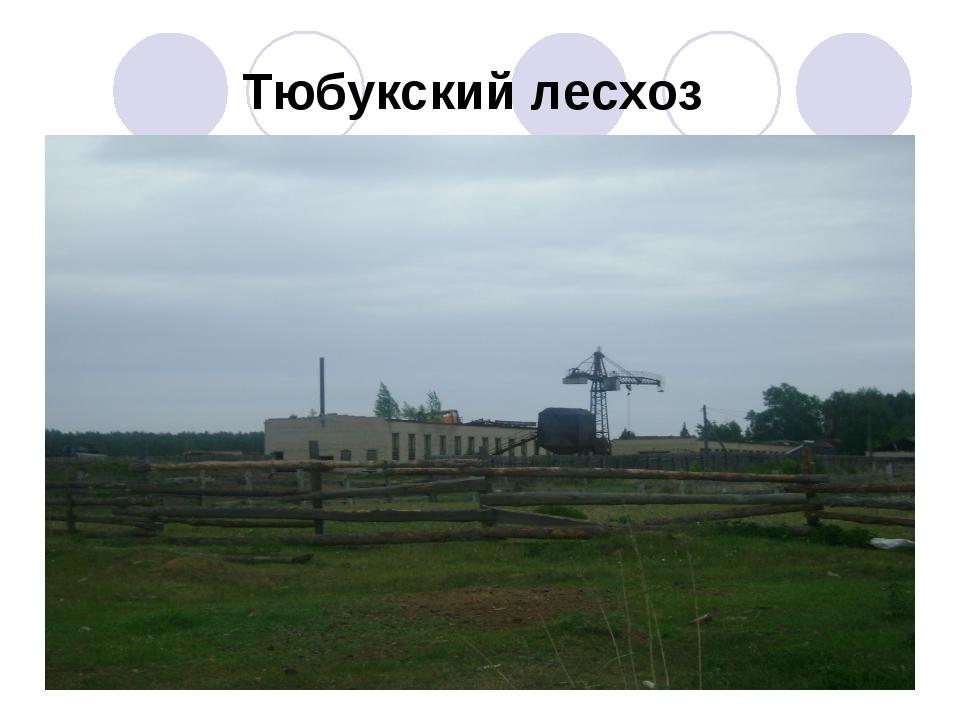 Тюбукский лесхоз .