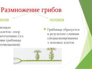 Размножение грибов Грибница образуется в результате слияния специализированны