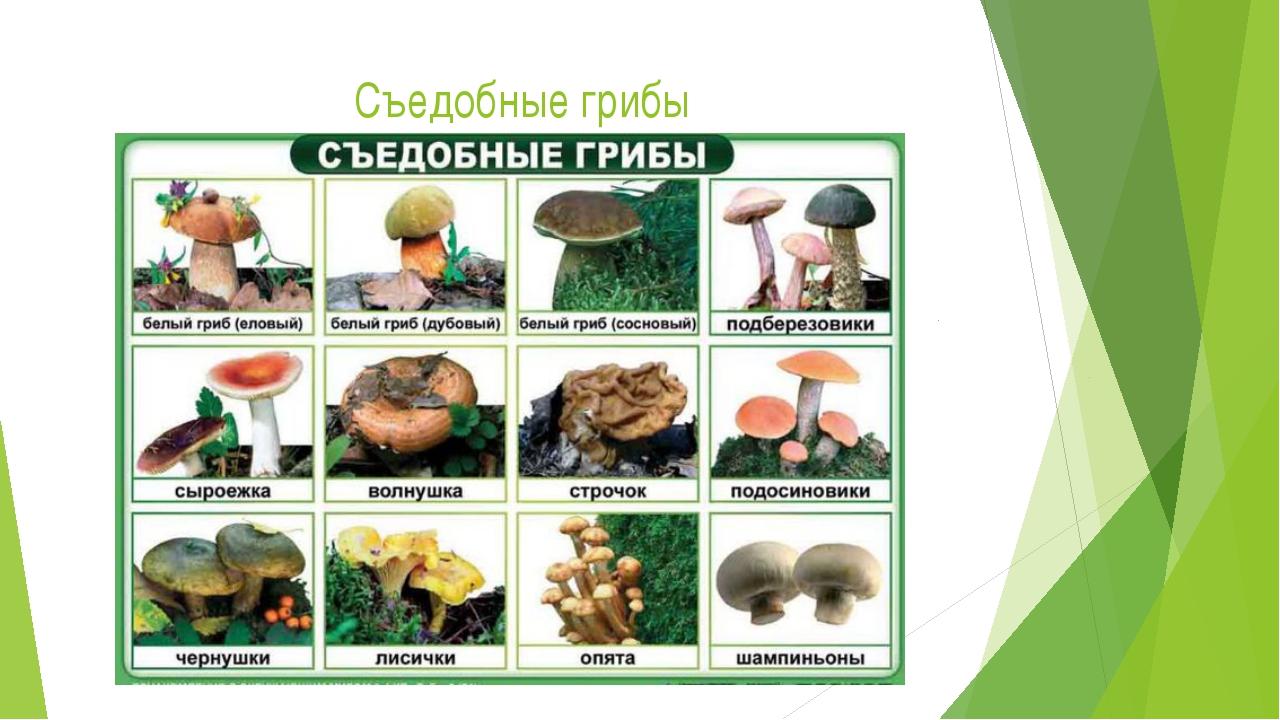 Виды съедобных грибов фото и названия