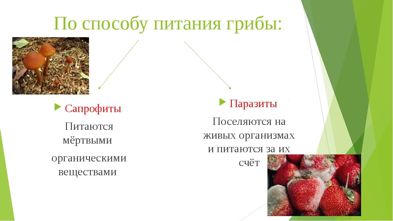 По способу питания грибы: Паразиты Поселяются на живых организмах и питаются...