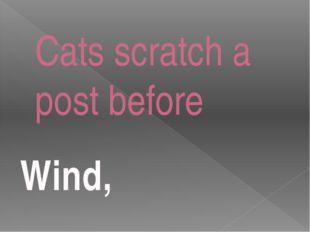 Cats scratch a post before Wind,