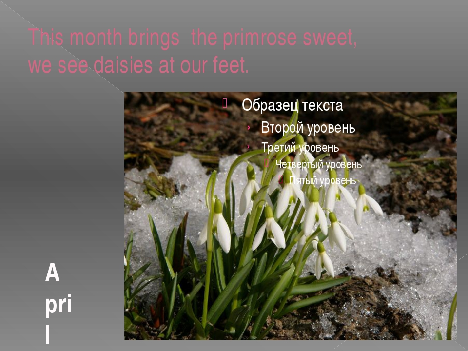 This month brings the primrose sweet, we see daisies at our feet. April
