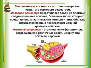 Тело яичников состоит из мозгового вещества, покрытого корковым веществом. Мо