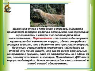 Дракониха Флора с Комодских островов, живущая в британском зоопарке, родила 8