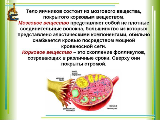 Тело яичников состоит из мозгового вещества, покрытого корковым веществом. Мо...