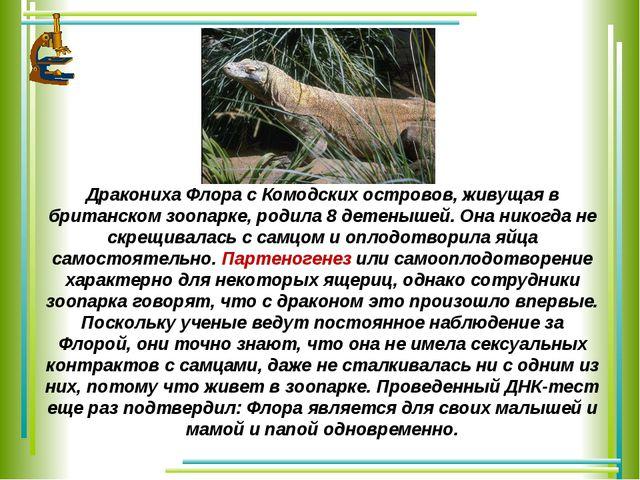 Дракониха Флора с Комодских островов, живущая в британском зоопарке, родила 8...