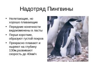 Надотряд Пингвины Нелетающие, но хорошо плавающие Передние конечности видоизм