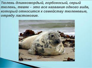 Тюлень длинномордый, горбоносый, серый тюлень, тевяк – это все названия одног