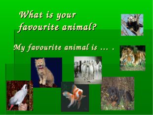 What is your favourite animal? My favourite animal is … .