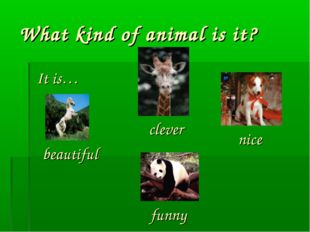 What kind of animal is it? It is… beautiful funny nice clever