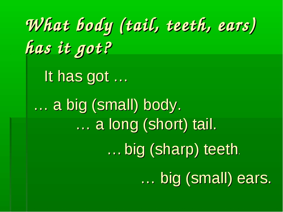 What body (tail, teeth, ears) has it got? … a big (small) body. … a long (sho...