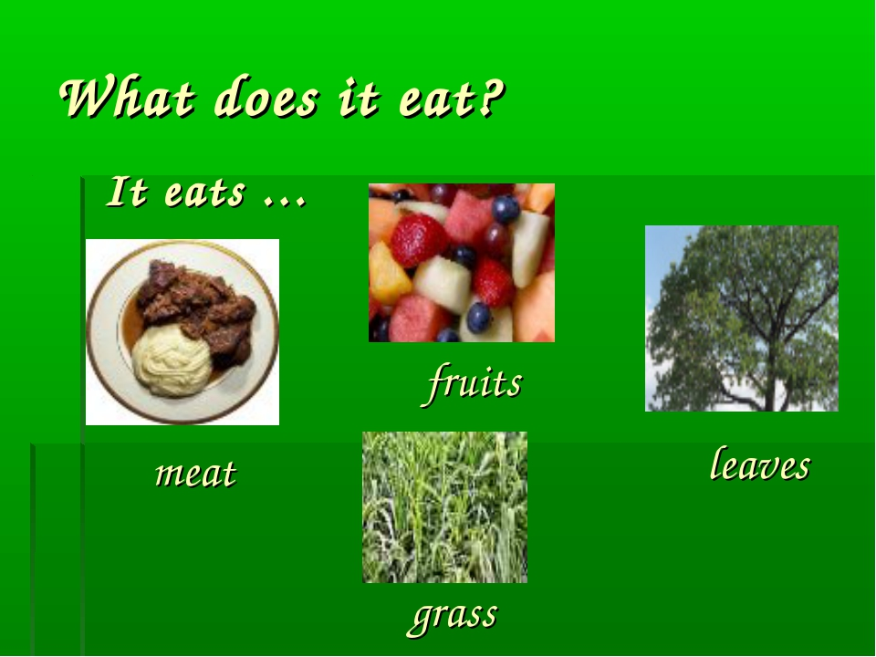 What does it eat? It eats … fruits leaves meat grass