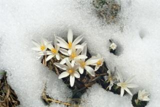 http://img1.liveinternet.ru/images/attach/c/8/99/379/99379281_5.jpg