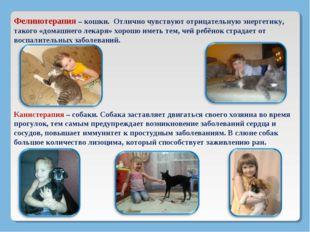 Фелинотерапия – кошки. Отлично чувствуют отрицательную энергетику, такого «до