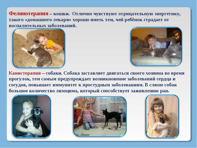 Фелинотерапия – кошки. Отлично чувствуют отрицательную энергетику, такого «до...