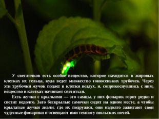 У светлячков есть особое вещество, которое находится в жировых клетках их те