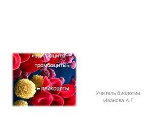 Транспортная функция Защитные функции Функция гомеостаза Функции крови