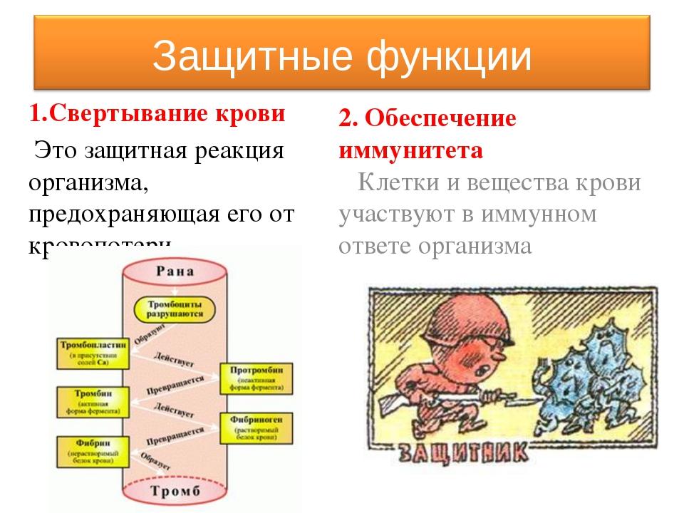 Кровь Плазма Форменные элементы Эритроциты Лейкоциты Тромбоциты