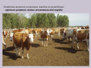 Хозяйство является племенным заводом по разведению: - крупного рогатого скот