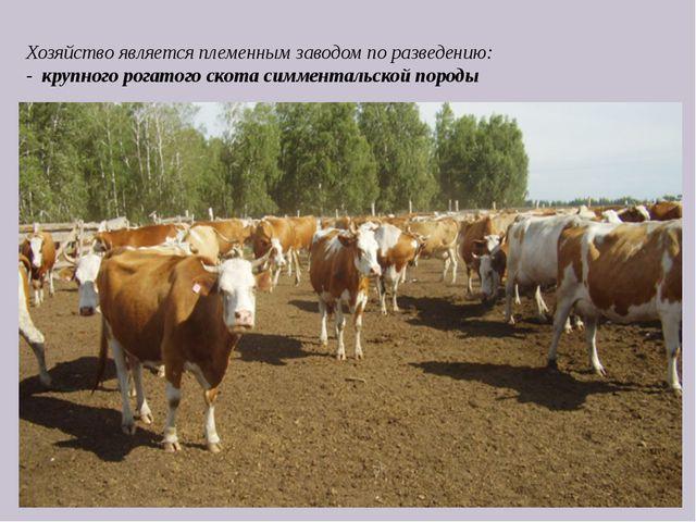 Хозяйство является племенным заводом по разведению: - крупного рогатого скот...