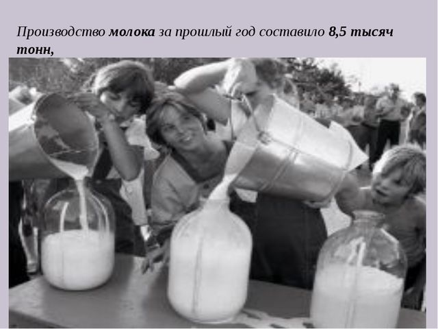 Производство молока за прошлый год составило 8,5 тысяч тонн,