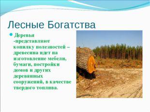 Лесные Богатства Деревья -представляют копилку полезностей – древесина идет н