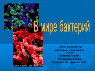 Проект по биологии выполнили учащиеся 5Б класса Пронина Ксения Мычелкина Рена