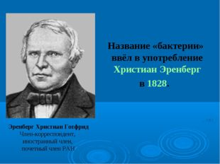 Название «бактерии» ввёл в употребление Христиан Эренберг в 1828. Эренберг Х