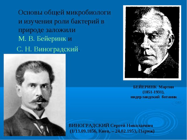 Основы общей микробиологи и изучения роли бактерий в природе заложили М. В....