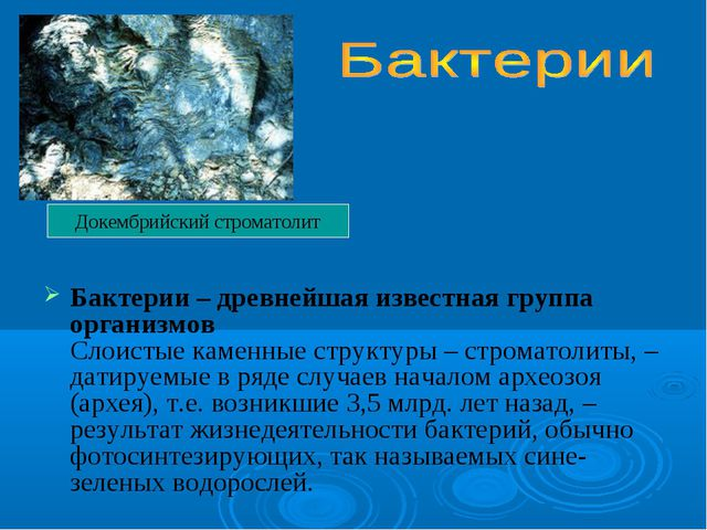 Бактерии – древнейшая известная группа организмов Слоистые каменные структуры...