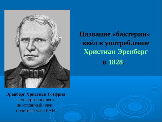 Название «бактерии» ввёл в употребление Христиан Эренберг в 1828. Эренберг Х...
