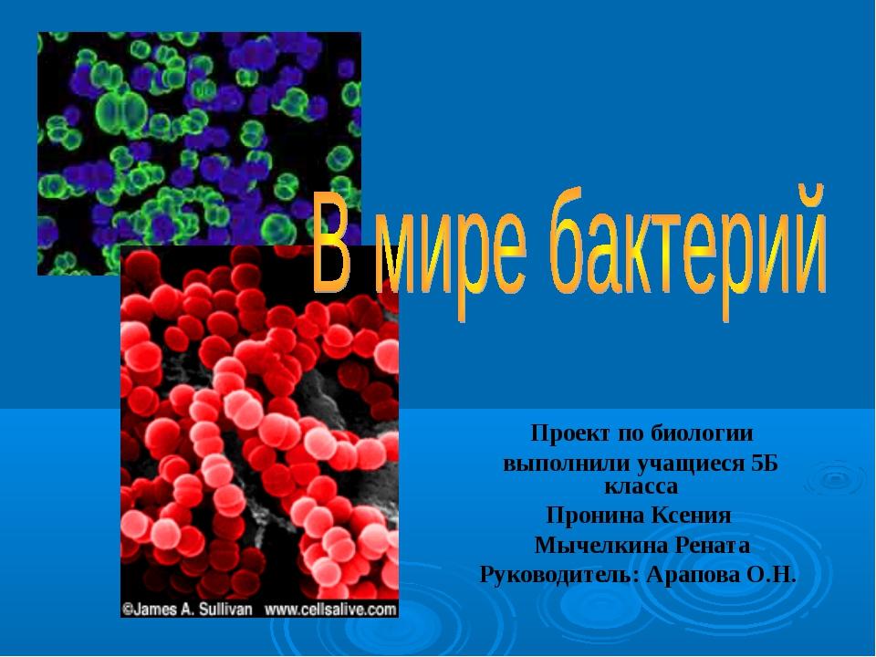Проект по биологии выполнили учащиеся 5Б класса Пронина Ксения Мычелкина Рена...