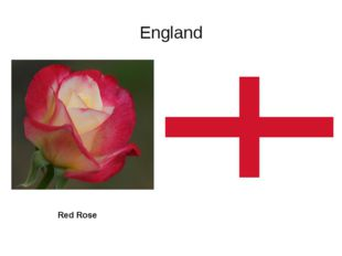 England Red Rose