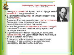 Хромосомная теория наследственности Томас Хант Морган (1866 – 1945) Гены расп