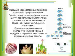 Передача наследственных признаков происходит при размножении. При бесполом ра