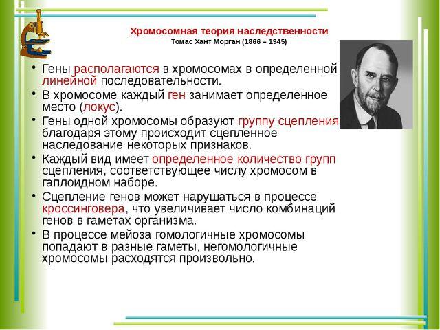Хромосомная теория наследственности Томас Хант Морган (1866 – 1945) Гены расп...