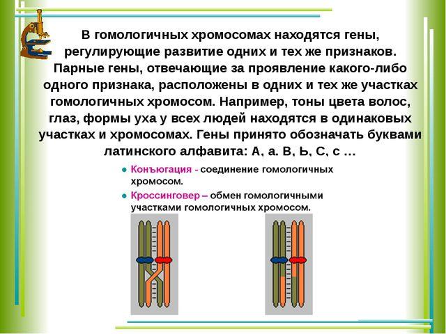 В гомологичных хромосомах находятся гены, регулирующие развитие одних и тех ж...
