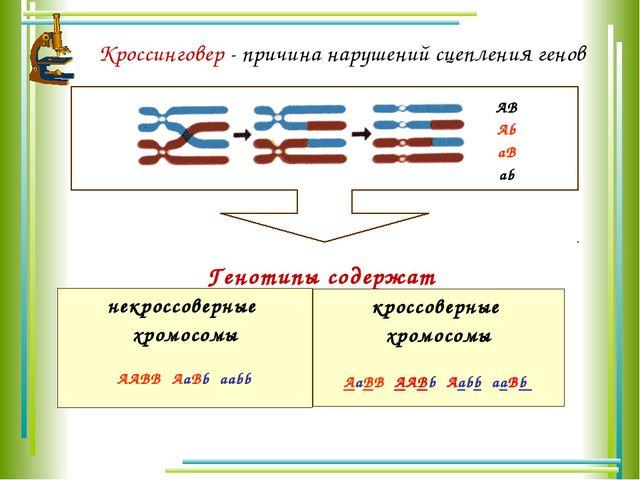 Кроссинговер - причина нарушений сцепления генов AB Ab aB ab Генотипы содержа...