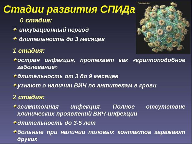 Стадии развития СПИДа 0 стадия: инкубационный период длительность до 3 месяце...