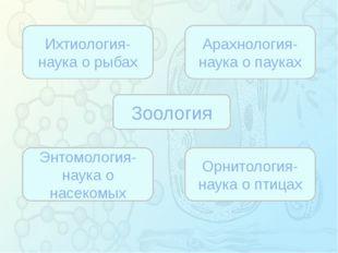 Зорина Наталья Николаевна, учитель биологии и экологии Зоология Ихтиология-