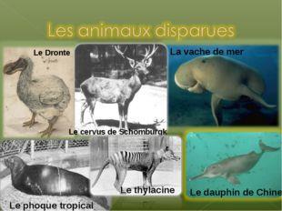 Le Dronte La vache de mer Le dauphin de Chine Le cervus de Schomburgk Le phoq
