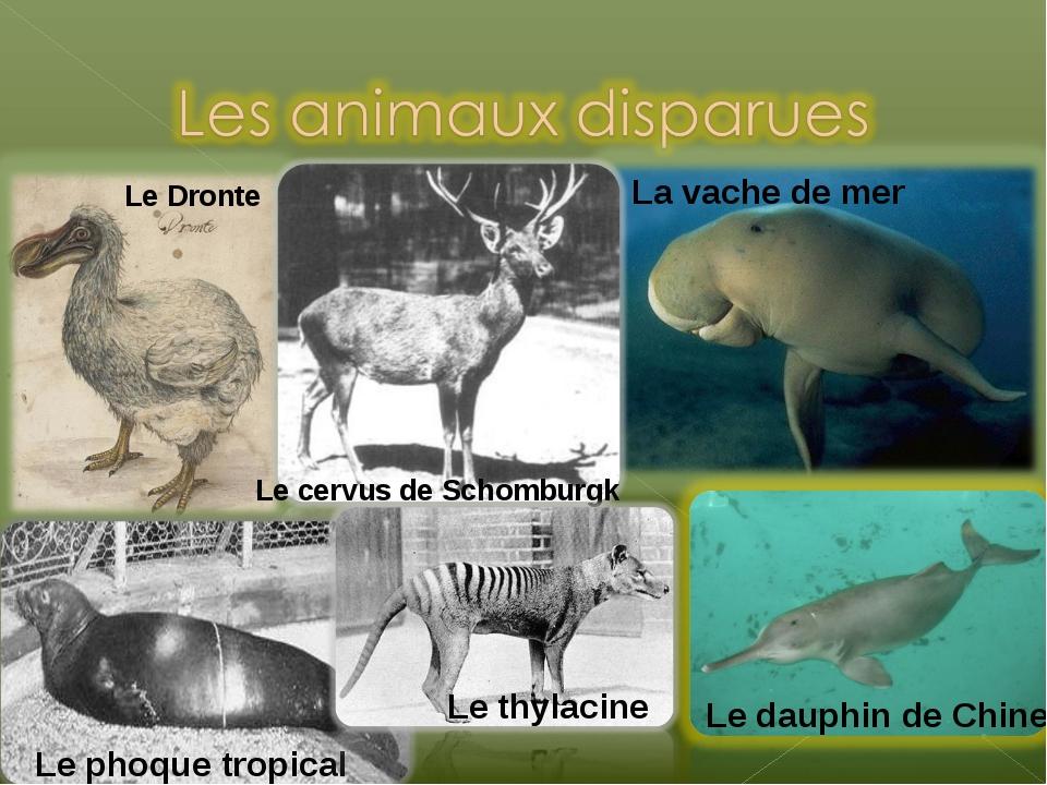 Le Dronte La vache de mer Le dauphin de Chine Le cervus de Schomburgk Le phoq...