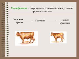 Модификация –это результат взаимодействия условий среды и генотипа Условия ср